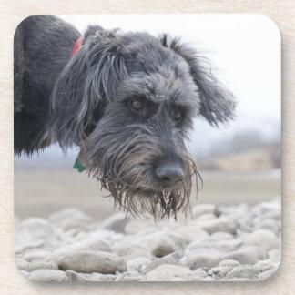 Retrato del perro de la raza de la mezcla, posavasos