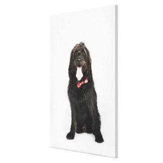 Retrato del perro de Labradoodle Lona Envuelta Para Galerías