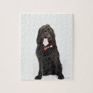 Retrato del perro de Labradoodle Puzzle
