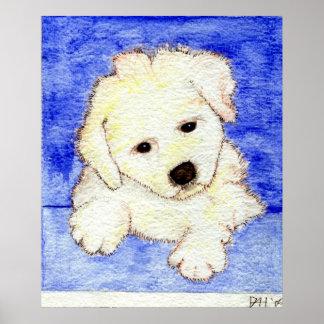 Retrato del perro de perrito de Bichon Frise Póster