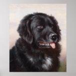 Retrato del perro de Terranova Posters