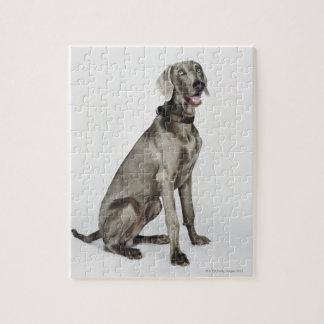 Retrato del perro de Weimaraner Rompecabezas