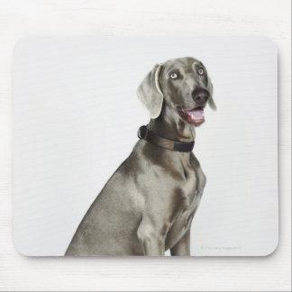 Retrato del perro de Weimaraner Tapetes De Ratón