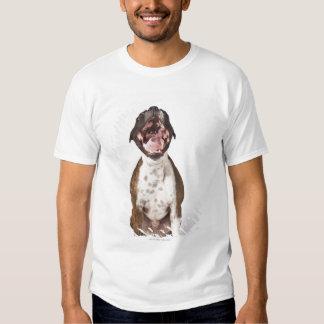 retrato del perro del boxeador que bosteza camisas