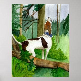 Retrato del perro del Coonhound del caminante de T Póster