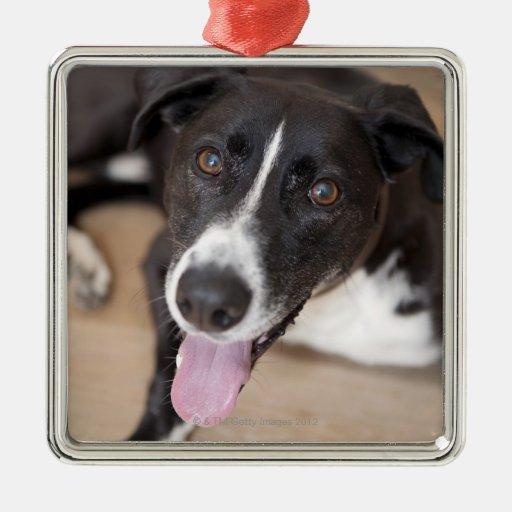 retrato del perro negro adorno navideño cuadrado de metal