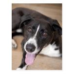 retrato del perro negro postales