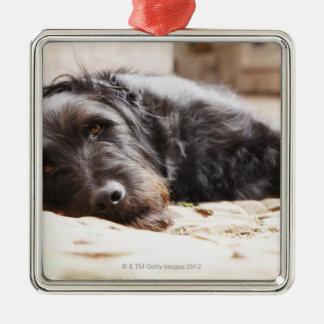 retrato del perro negro que miente en yarda adorno navideño cuadrado de metal