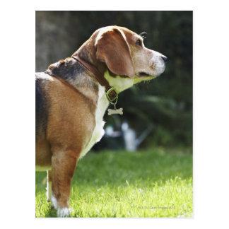Retrato del perro postales