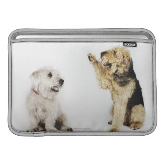 Retrato del perro que agita en otro perro fundas MacBook