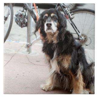 Retrato del perro que espera expectante dueño; azulejo cuadrado grande