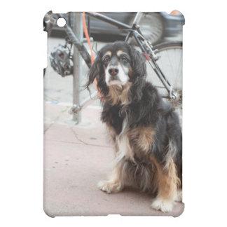 Retrato del perro que espera expectante dueño;