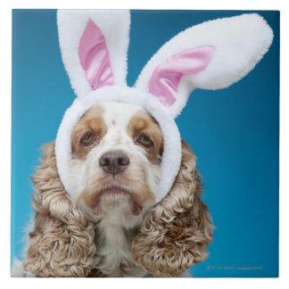 Retrato del perro que lleva los oídos del conejito azulejo cuadrado grande