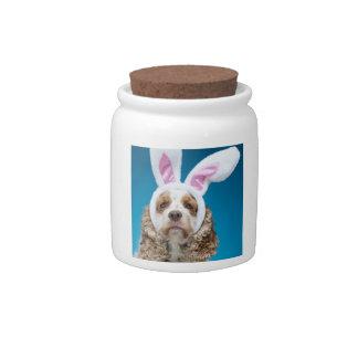 Retrato del perro que lleva los oídos del conejito plato para caramelo