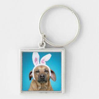 Retrato del perro que lleva los oídos del conejito llaveros