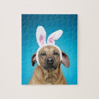 Retrato del perro que lleva los oídos del conejito rompecabezas con fotos