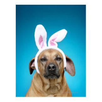 Retrato del perro que lleva los oídos del conejito tarjeta postal
