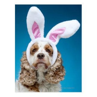 Retrato del perro que lleva los oídos del conejito postal