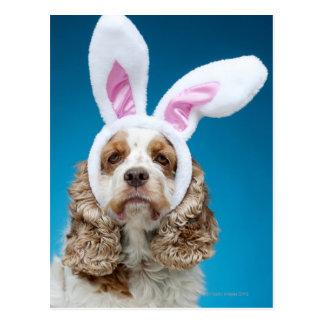 Retrato del perro que lleva los oídos del conejito postales