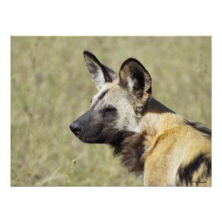 Retrato del perro salvaje fotografias