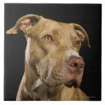 Retrato del pitbull rojo de la nariz con negro azulejos cerámicos