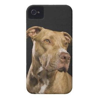 Retrato del pitbull rojo de la nariz con negro carcasa para iPhone 4