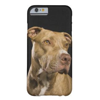 Retrato del pitbull rojo de la nariz con negro funda barely there iPhone 6
