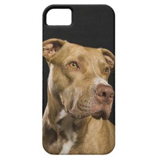 Retrato del pitbull rojo de la nariz con negro funda para iPhone SE/5/5s