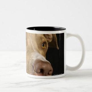 Retrato del pitbull rojo de la nariz con negro taza dos tonos