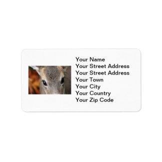 Retrato del primer del cervatillo de los ciervos etiquetas de dirección
