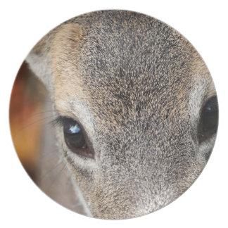 Retrato del primer del cervatillo de los ciervos platos para fiestas