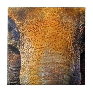 Retrato del primer del elefante asiático azulejo cuadrado pequeño
