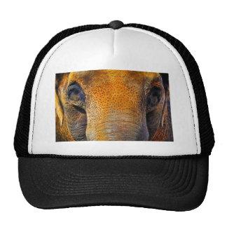 Retrato del primer del elefante asiático gorras de camionero