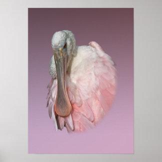 Retrato del Spoonbill rosado Impresiones