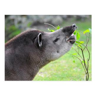 Retrato del tapir suramericano postal