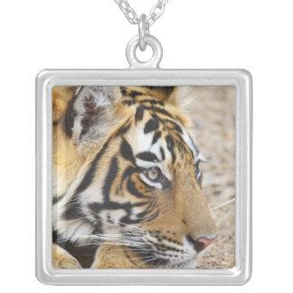Retrato del tigre de Bengala real, Ranthambhor 3 Colgante Cuadrado