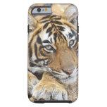 Retrato del tigre de Bengala real, Ranthambhor 4