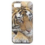 Retrato del tigre de Bengala real, Ranthambhor 4 iPhone 5 Case-Mate Protectores