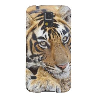 Retrato del tigre de Bengala real, Ranthambhor 4 Carcasa De Galaxy S5