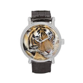Retrato del tigre de Bengala real, Ranthambhor 4 Relojes De Mano