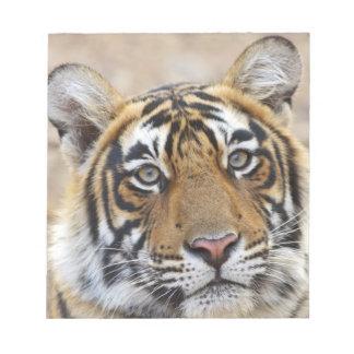 Retrato del tigre de Bengala real, Ranthambhor Libretas Para Notas