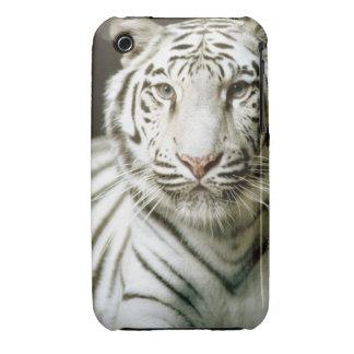 Retrato del tigre iPhone 3 Case-Mate protectores