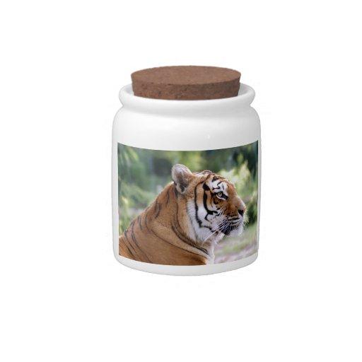 Retrato del tigre plato para caramelo
