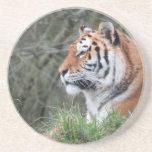 Retrato del tigre siberiano posavasos personalizados