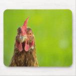 Retrato divertido del pollo - Mousepad Tapete De Ratones