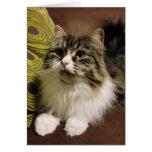 Retrato dulce de un gato siberiano tarjetas