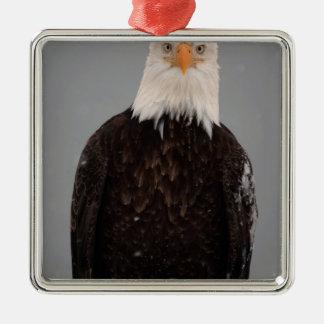 Retrato en la nieve, Haliaeetus de Eagle calvo Adorno Cuadrado Plateado