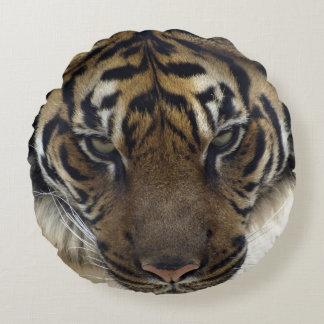 Retrato en peligro de la foto de la fauna del cojín redondo