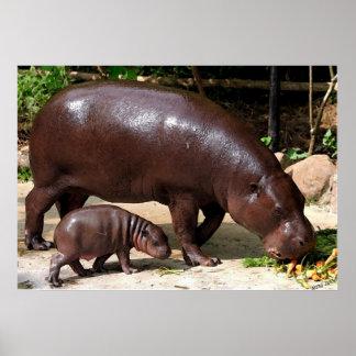Retrato enano del Hippopotamus de los pares del hi Póster