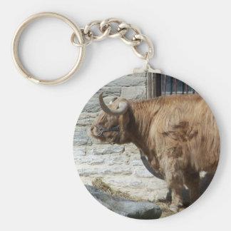 Retrato escocés del ganado de la montaña llavero redondo tipo pin